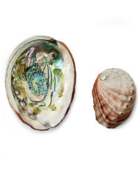 Food & Wine: Abalone