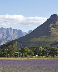 Food & Wine: South Africa's Beautiful Wine Country