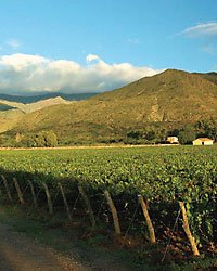 Food & Wine: Torrontes New Malbec