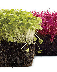 Food & Wine: Microgreens at home