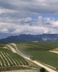 Food & Wine: Rioja Wine Producers We Love: Bodegas Valdemar.