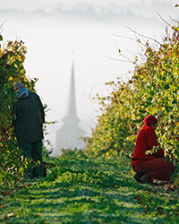 Food & Wine: Loire Valley Wine Producers We Love