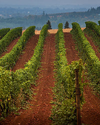 Food & Wine: Oregon Wine Producers We Love