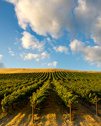 Food & Wine: Washington Wine Producers We Love