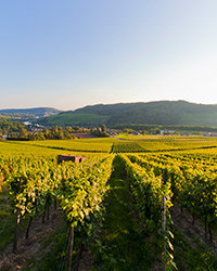 Food & Wine: World's Best Riesling Regions: Germany's Mosel