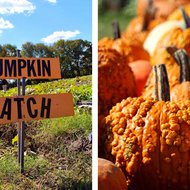 Food & Wine: The 25 Best Pumpkin Patches in the U.S.