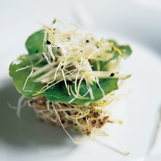 Sprouts with Apples and Nasturtium Leaves