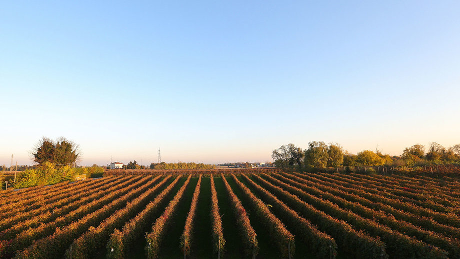 italy's harvest down by 30%